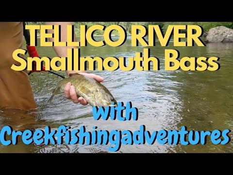 Tellico River **SMALLMOUTH** Fishing!!! Ft. Creekfishingadventures