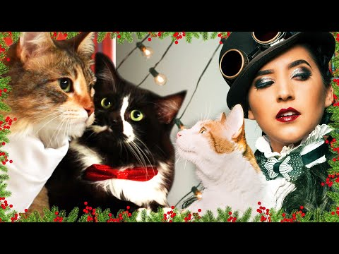 download We Shot The Ultimate Photoshoot With Our Cats • Ladylike