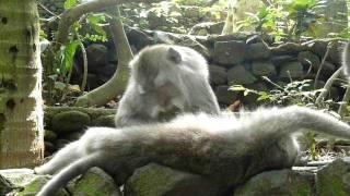Милейшее видео из жизни обезьян