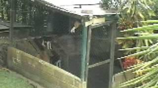Repeat youtube video El perro del chapo Guzman