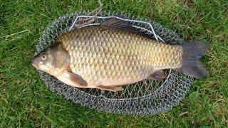 Ловим карася Рыбалка на Кубани