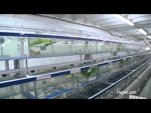 Segrest Farms in Tampa with hundreds of thousands of fish