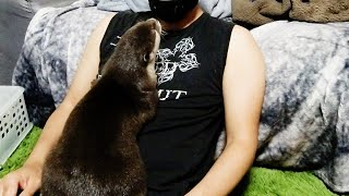تحميل فيديو Give me more fish! The otter that appeals to me [Otter life Day 265]【カワウソアティとにゃん先輩】