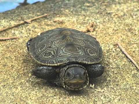 tiny-turtle-wakes-up-too-early