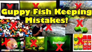 Mistakes on Keeping Guppy Fish!