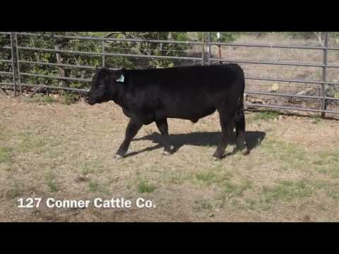 Conner Cattle Co 127