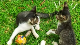 Super Cute Kitten in the World•Cute Baby Kittens Playing•Kucing•Cat Funny Vedios #shorts #cats
