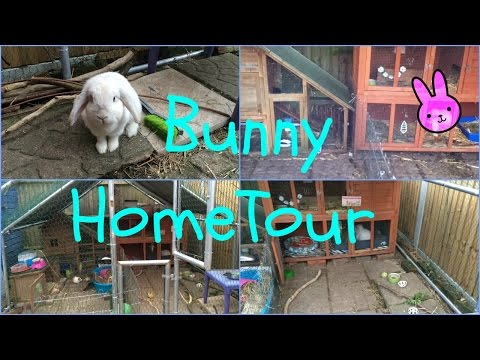 Rabbit Home Tour | Furry Friends