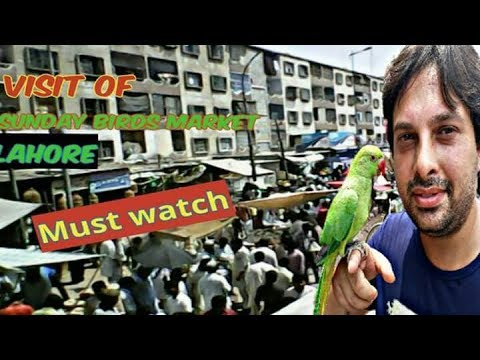VISIT OF SUNDAY BIRDS MARKET LAHORE SHALIMAR GARDEN | MUST WATCH (URDU/HINDI)