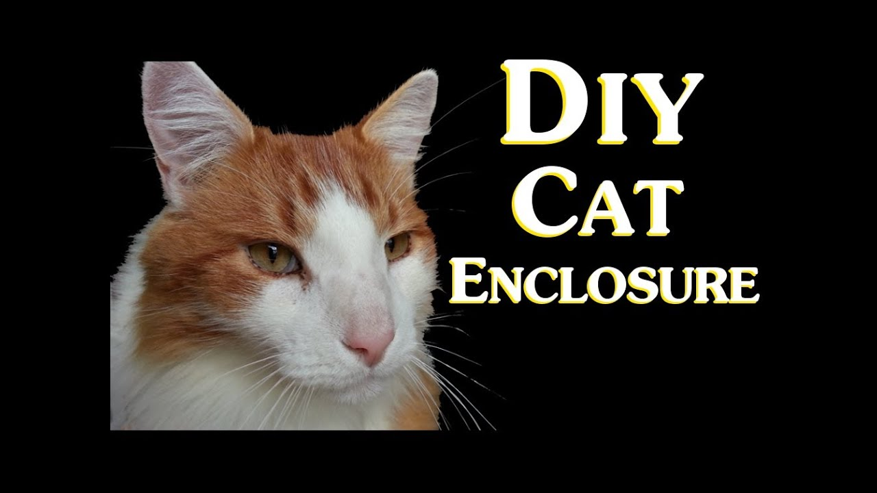 outdoor cat runs diy cat enclosure how to save money by making a cheap do it