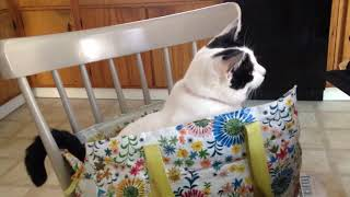 Binge-Kitty