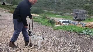 איך ללמד את הכלב לבוא אליי