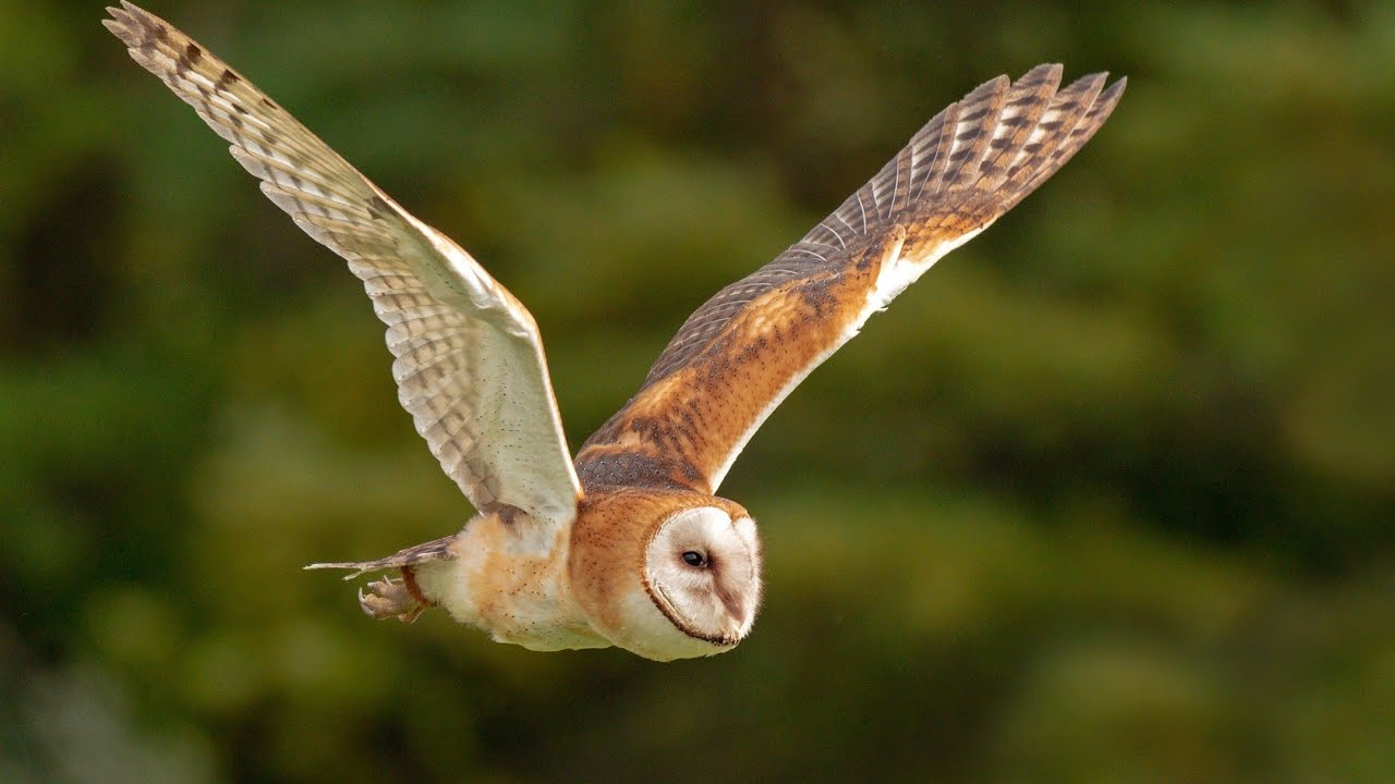 Teach Besides Me: Scientific Name For Owls