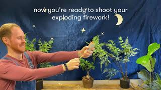 Indoor fireworks for you and your teddy