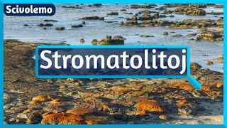 Stromatolitoj – antikvaj vivantaj ŝtonoj en la strando