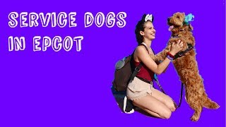Service dogs on rides in EPCOT || Disney Vlog #3