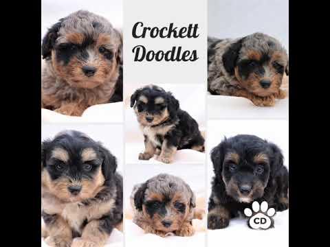 Crockett Doodles