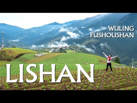 🌄{Trip} HIGH-MOUNTAIN FARMS Wuling and Fushoushan (李山/武陵農場/福壽山農場)
