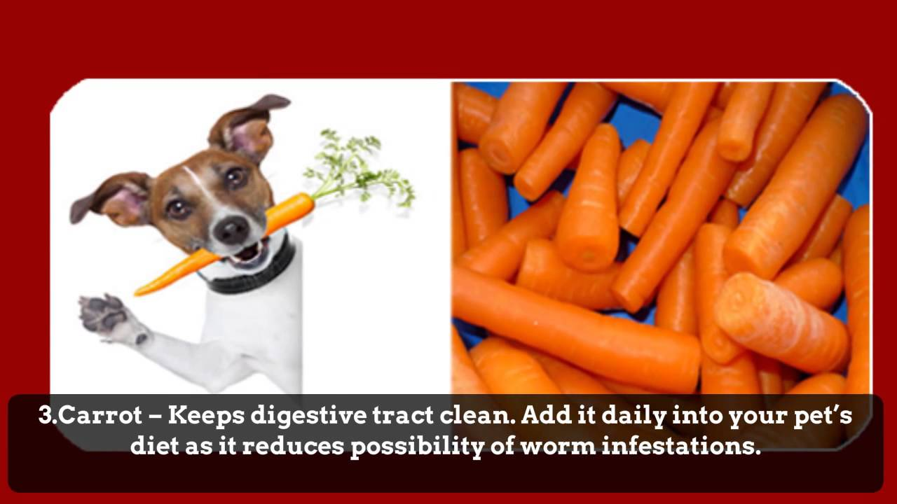 Natural Way To Get Rid Of Cats Worms
