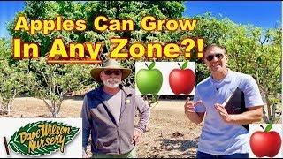 How To Grow Apples In Warmer Grow Zones!!!  🍎🍏  MOST VARIETIES!!!