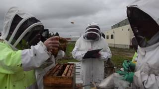 Breeding Queen Bees – a best practice video from the Honey Bee & Pollination Program