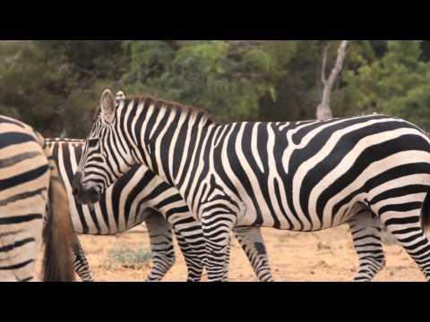 Safari Zoo Mallorca