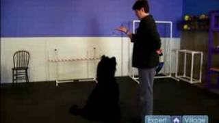 How To Train A Dog : Dog Training With Lures, Rewards, & Bribes