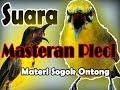 Masteran Pleci Sogok Ontong Kenarian Rapet  Mp3 - Mp4 Download