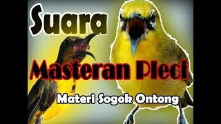 Download Mp3 Masteran Pleci Sogok Ontong Kenarian Rapet