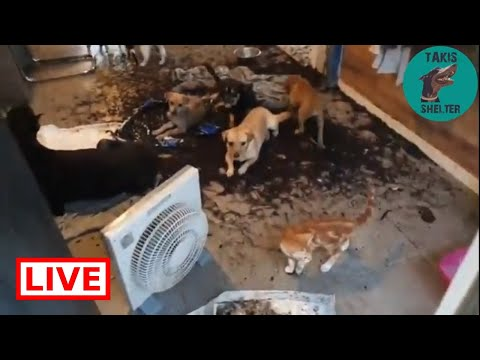 The puppies are destroying my house - Takis Shelter