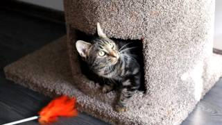 Кошка играется в кошачьем доме