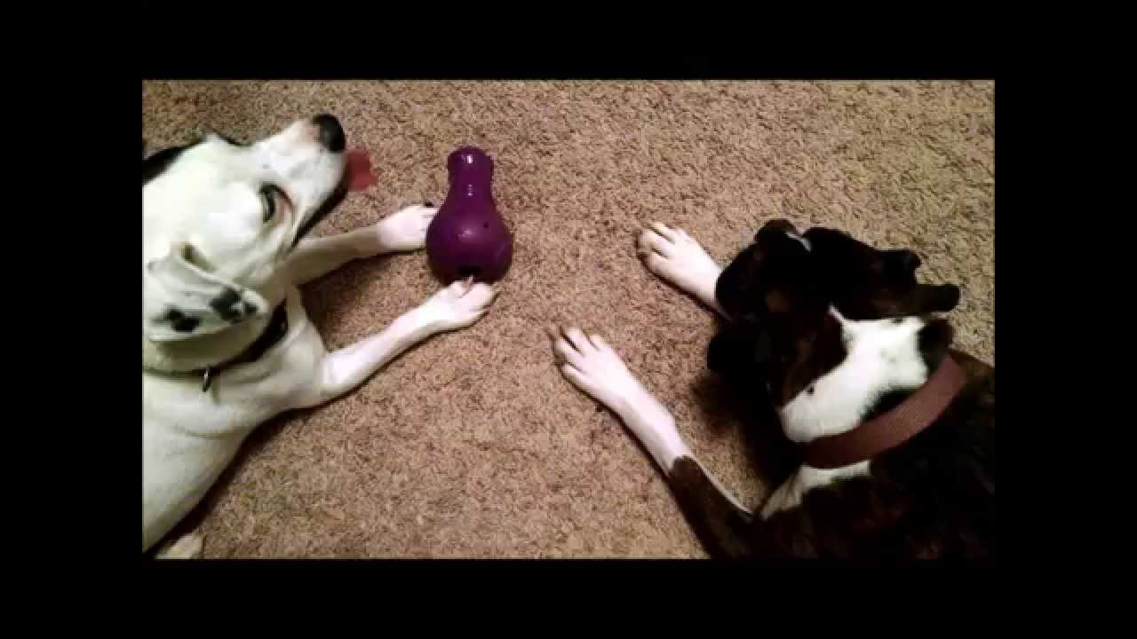 Busy Buddy Booya Squeaky Toy Finally Indestructible Dog Toys