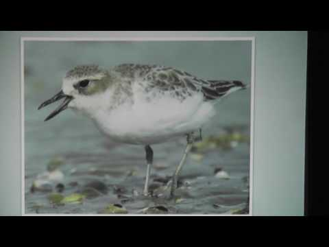 Birds In Shoal Bay, Auckland