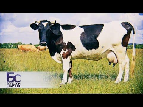 Правда о молоке | Большой скачок