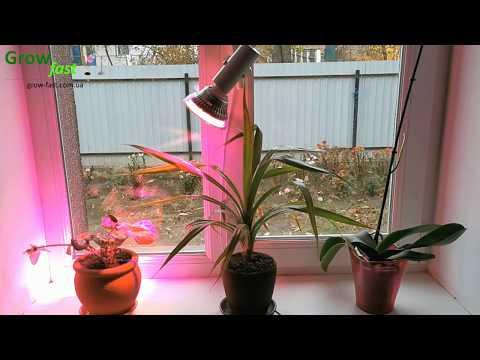 Патрон-прищепка для установки фитолампы (установка фитолампы на окно, как установить фитолампу)