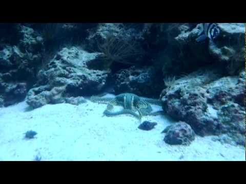 Star Fish Eats Fish