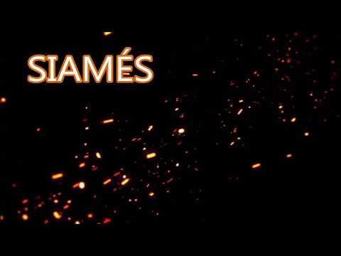 Siamés - The Cave / Subtitulado en español