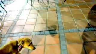 在路上遇到的流浪狗超有靈性,可以這樣和我做朋友!