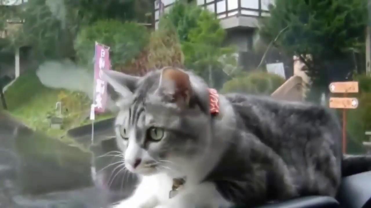 Funny Cat Meow Vine