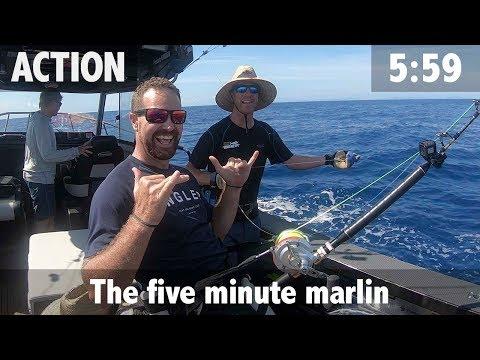 Striped Marlin Fishing - Kiwi Style