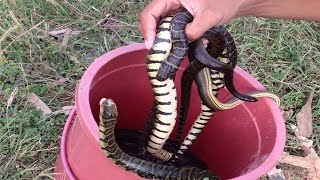 Amazing Snake Trap Using Deep Hole-how to make pitfall fishing-How to Catch Snake in Cambodia