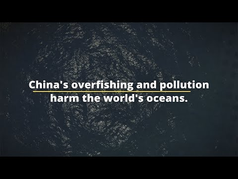 China's Overfishing And Pollution Harm The World's Oceans