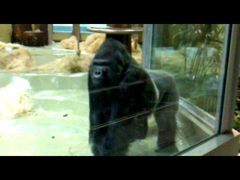 how to get scratches out of gorilla glass