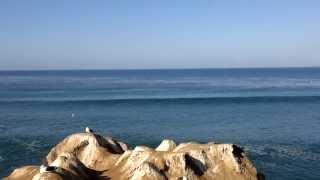 Focas gritando em La Jolla Cove (e vista) - 20-DEZ-13