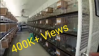 Agapornis Breeder goes to BULACAN - RVB Aviary