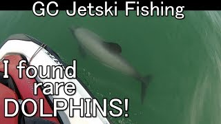 Fishing in Paradise with RARE DOLPHINS!