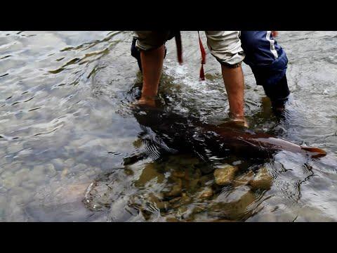 рыбалка на китое таймень