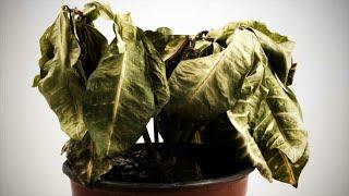 Почему комнатные растения перестают «радоваться жизни»? Как спасти растения?