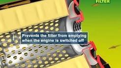 Anti drain valve
