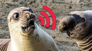 🔊🙉 12 Most Unusual Sounds Animals Make 🙀
